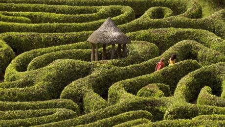 Visitors in the laurel maze at Glendurgan Garden. © NTPL/John Millar