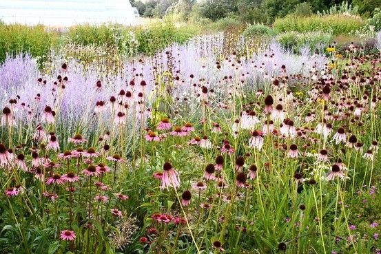 garden prairie guys Topsoil garden prairie, il topsoil garden prairie, il has the best topsoil prices in garden prairie, il.