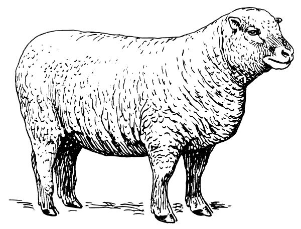 Free Sheep SVG File