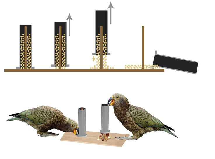 Concept: Lifting tubes enrichment for parrots and other animals.
