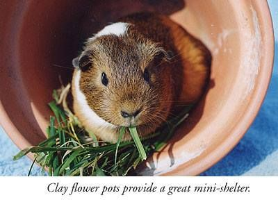 how to keep guinea pigs cool in summer