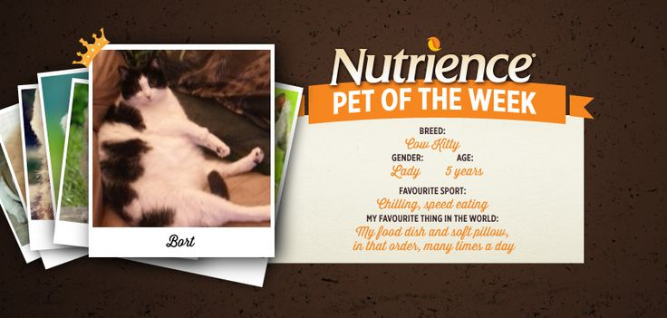 Bort couldn't have picked a better photo for her Internet debut. That's why she's this week's Nutrience Pet Of The Week! Submit your pet here: http://bit.ly/PetOfWeek