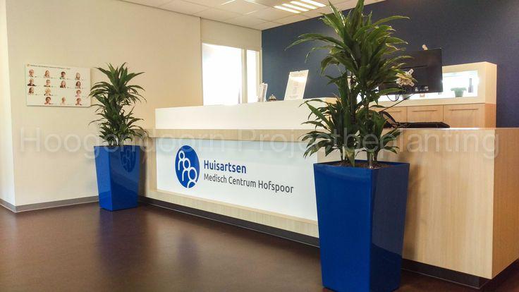 Phoenix rise (in kleur van het logo) met Dracaena janet craig bij de receptie van Medisch Centrum Hofspoor in Houten.