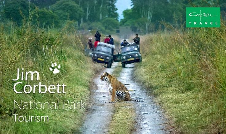 Don't be a follower. Leave your own trail. Opt for Jim Corbett National Park Tourism. To know more information. log on to: http://www.capertravelindia.com/india-wildlife/corbett-national-park.html