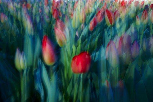 Hasta el 20 de junio.- Mano a mano entre dos grandes artistas del momento: Antonio Maya y Paco Caparrós. Bajo el título Spring 2 x 2, se abre esta exposición bajoe una doble perspectiva, rinde homenaje a la naturaleza. http://bit.ly/Kq4tWX