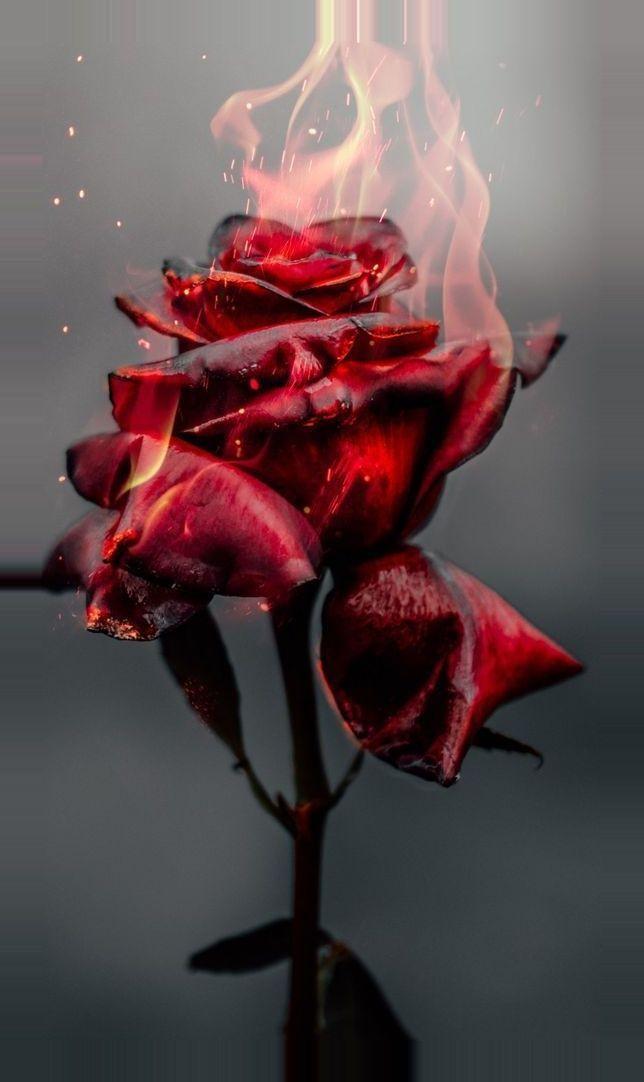 30 Jolis Bouquets De Roses De Mariee Reperes Sur Pinterest Rose Belle Bellissimi Sfondi Sfondi Per Iphone