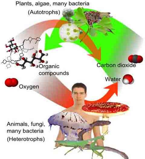 28 best Cell Biology Education Resources images on Pinterest