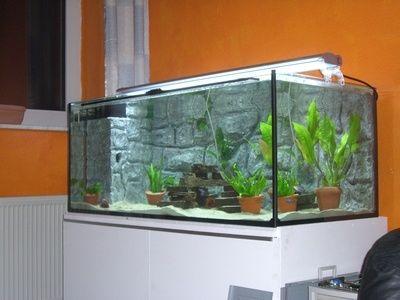Cómo instalar un acuario de agua dulce en casa | eHow en Español