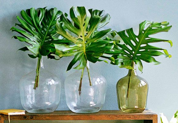 17 Best Images About Monstera On Pinterest Plant Pots Loft And Fresh Store