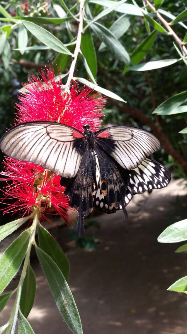 Beautiful  a pic I've taken at Butterfly Sanctuary Midlands South Africa