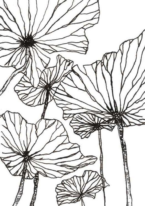 Botanical Prints Flower Photo Picture Wall Art Size A4 or A3 Print Poppy 24 Type