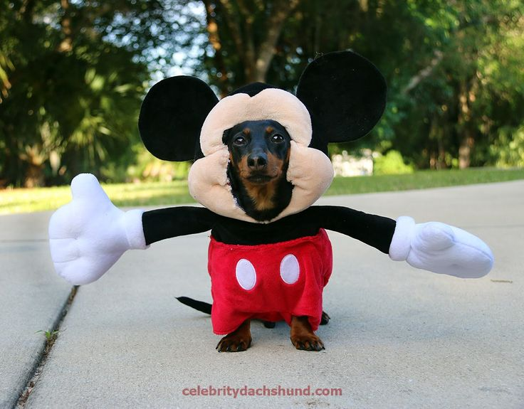 Look at this boy dressed as Mickey Mouse #disneystyle #funny #costume