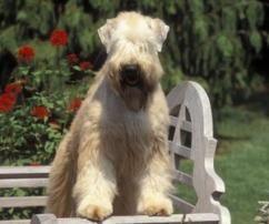 6 Great Irish Dog Breeds
