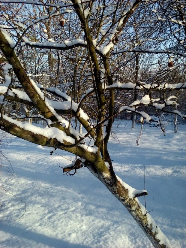 Zima w Polsce/Winter in Poland, Natura 15 258 (autor: jlez)