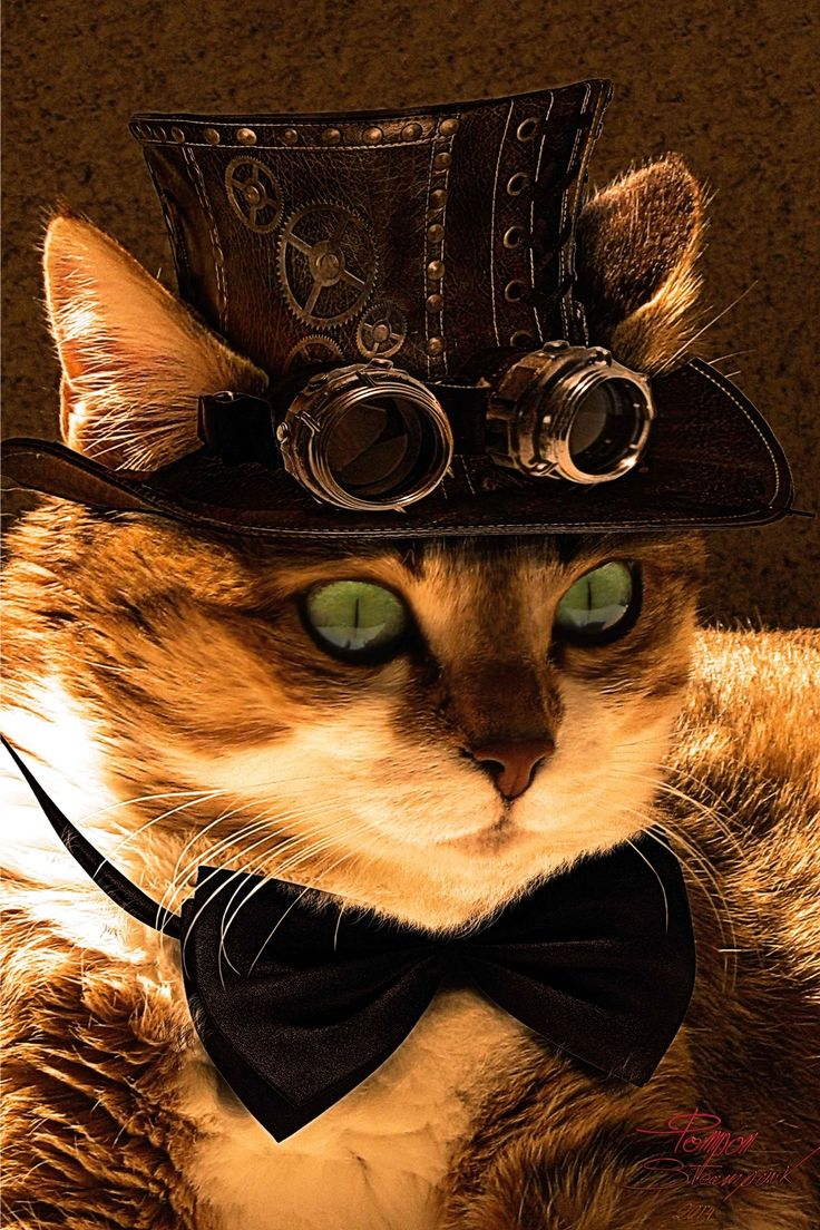 steampunktendencies:  Happy Caturday :) Cat steampunk by coolzero2a    Facebook | Google +|Twitter Steampunk Tendencies Official Group