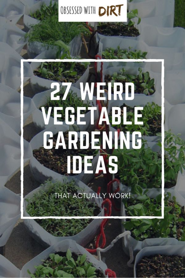 Vegetable Garden Beginner