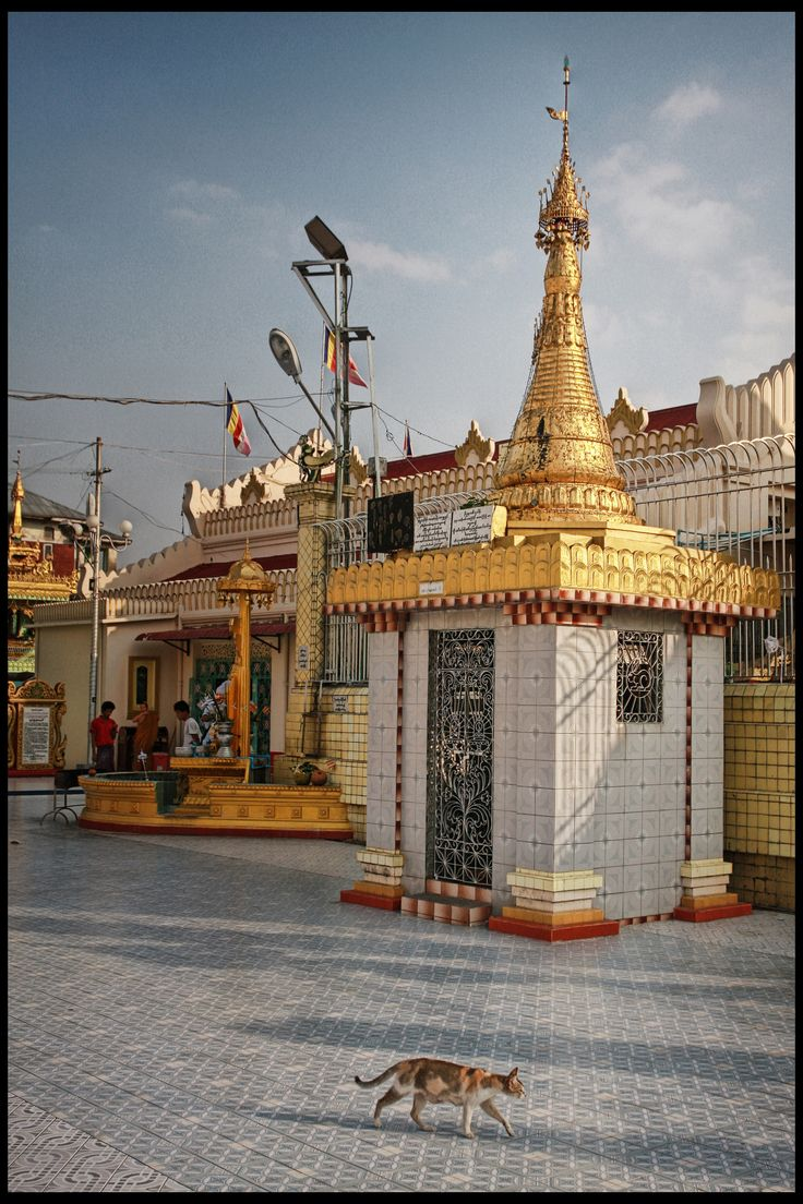 https://flic.kr/p/dGkNtC | Myanmar 30: temple cat