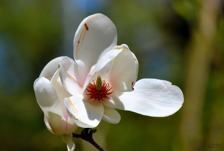 Who is excited for spring? I know I am!   This was taken a couple of years back at Simeria Arboretum.