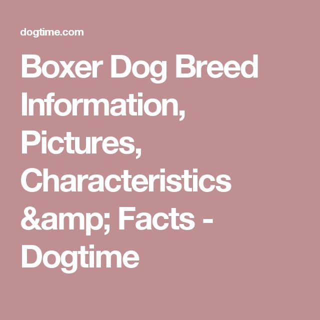 Boxer Dog Breed Information, Pictures, Characteristics & Facts - Dogtime