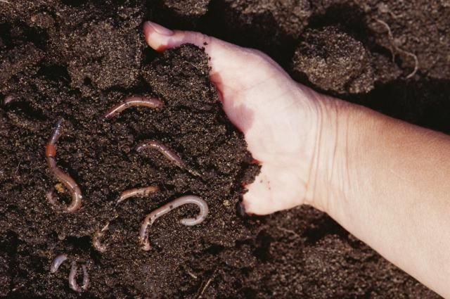 4 easy soil tests you can perform yourself for Soil yourself