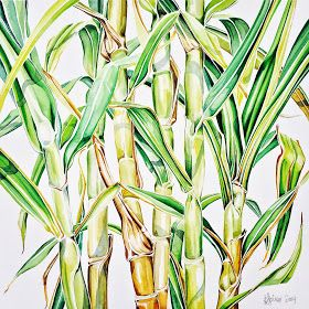Jane & Tom's sugarcane- watercolour on Arches paper by Pip Spiro