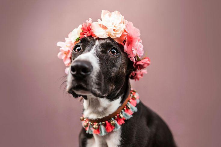Hippie Liebe   ❤️www.rudelliebe.de //  #hund #frenchbulldog #dog #dogs #halsband #dogsofinstagram #goldenretriever #instadog #dogstagram #dogoftheday #dogs_of_instagram #retriever #labrador #dobermann #instapets #puppy #bestwoof #dalmatiner #hundehalsband #labrador #labradoodle #jackrussel #mops #pets_of_instagram #irishsetter #australianshepherd #beagle #französischebulldogge #dalmatiner #dackel #magyarvizsla