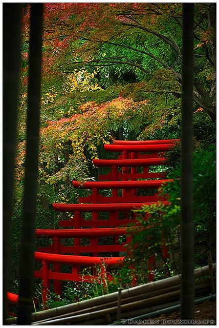 Shrine in bamboo forest, Kyoto, Japan