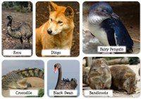 Photos of Australian Wildlife