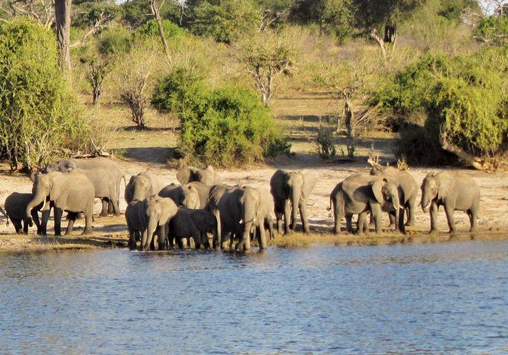 Chobe National Park, Bottswana