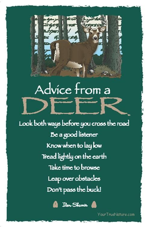 Advice from a deer