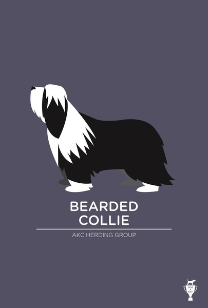 Bearded Collie by Bethany Ng