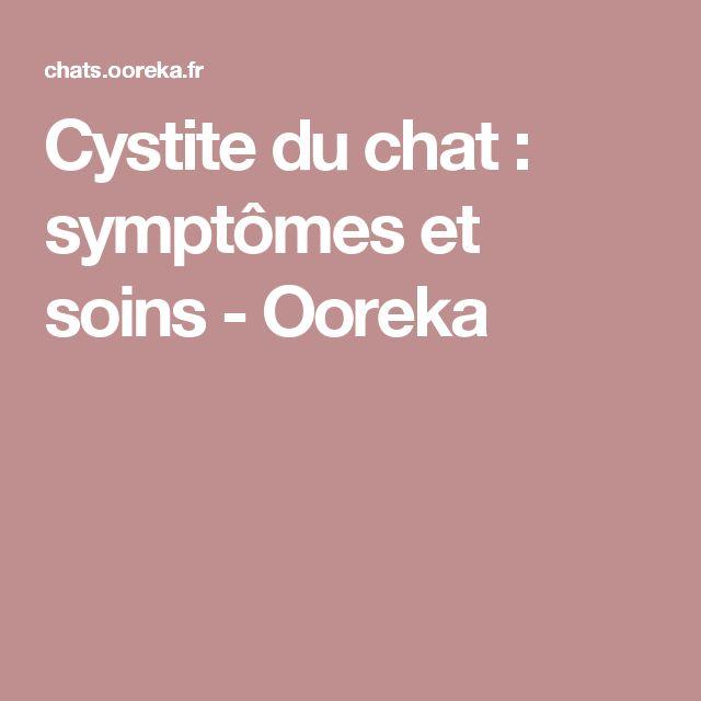 Cystite du chat : symptômes et soins - Ooreka