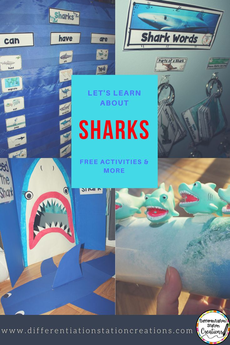 All About Sharks for Children: Animal Videos for ... - YouTube