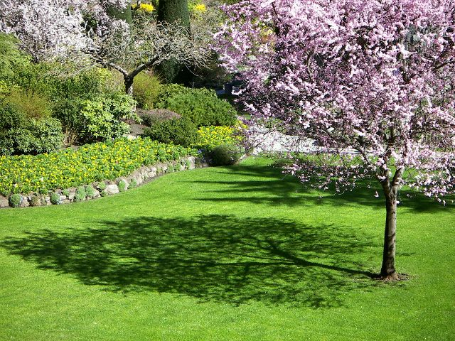 Avoid these 4 mistakes with your landscape trees!