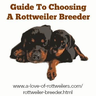 Choosing a reputable Rottweiler breeder is hugely important, and the first step towards finding a happy, healthy Rottie pup.