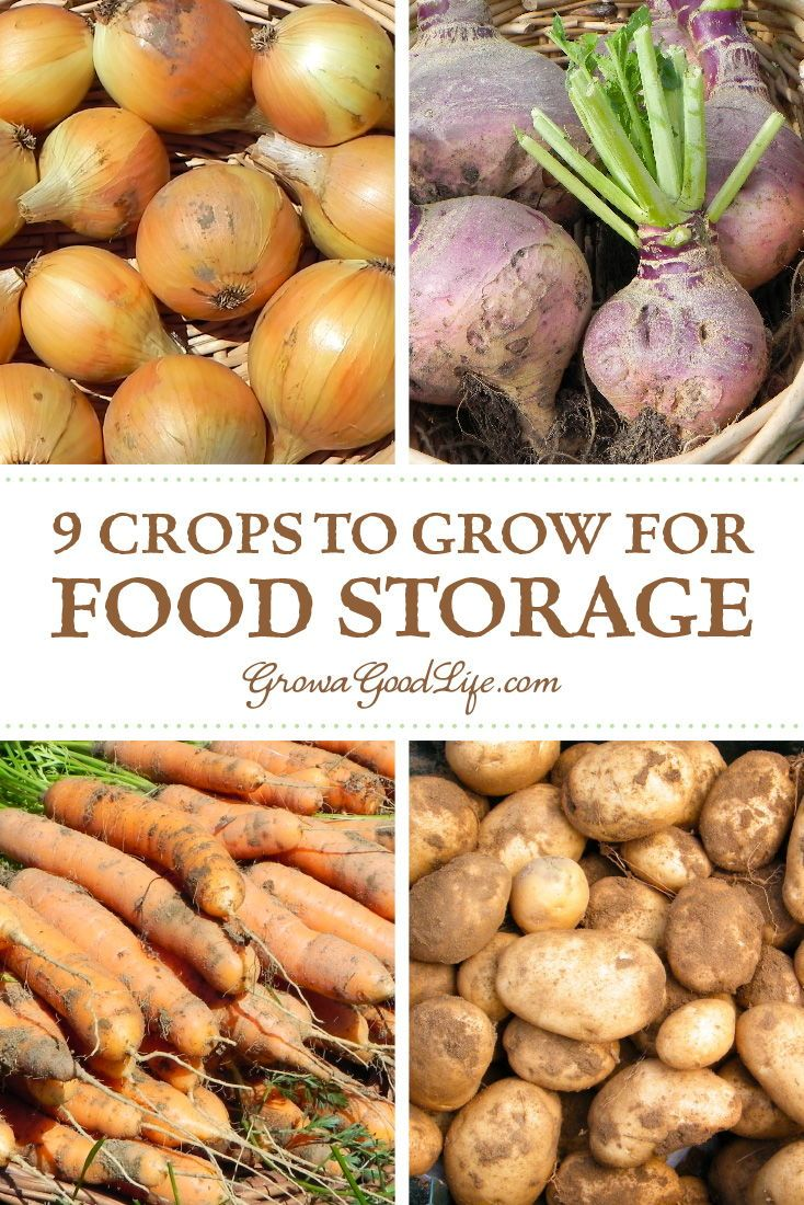 9 Crops To Grow For Food Storage Organic Vegetables Vegetable