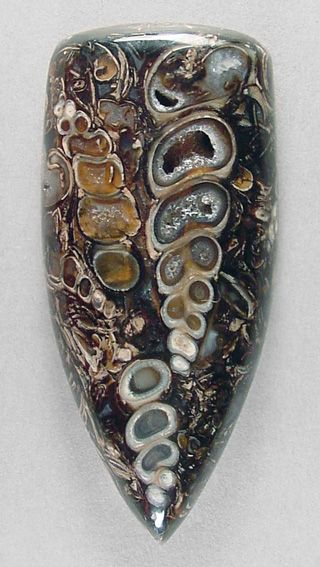 Turritella Agate (Wyoming)