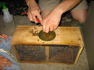 Installing a Bee Hive: A Nervous Beginners' Experiences : TreeHugger. I can't wait till we have our own place and have the garden put together. Then I can try my hand at bee keeping :)