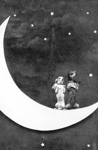 doggies on the moon