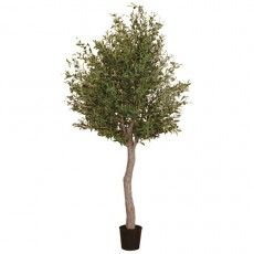 Giant Olive Tree in a Pot