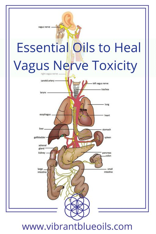 Heavy metals and sulfur toxins have a high affinity to nerves and can contaminate the vagus nerve. Because of the immense networking of sensory nerves and the nerves of the autonomic nervous system, toxins can be quickly absorbed in massive amounts.