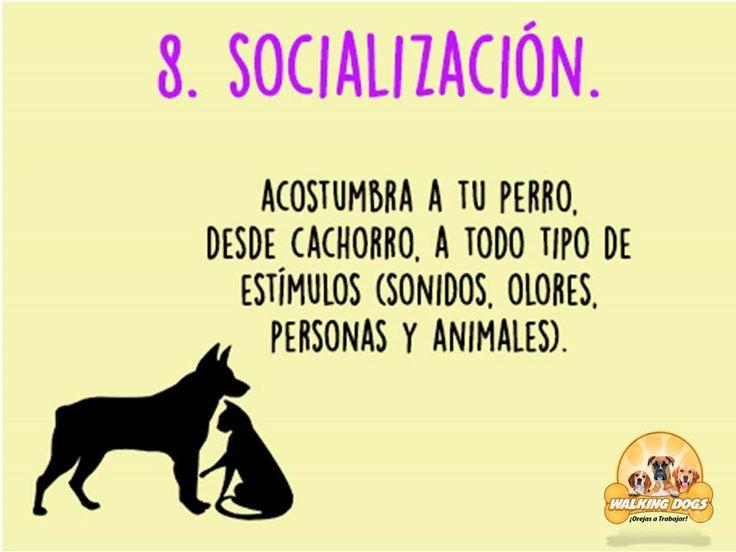 La socialización es vital, deja que tu perro comparta con otros animales.