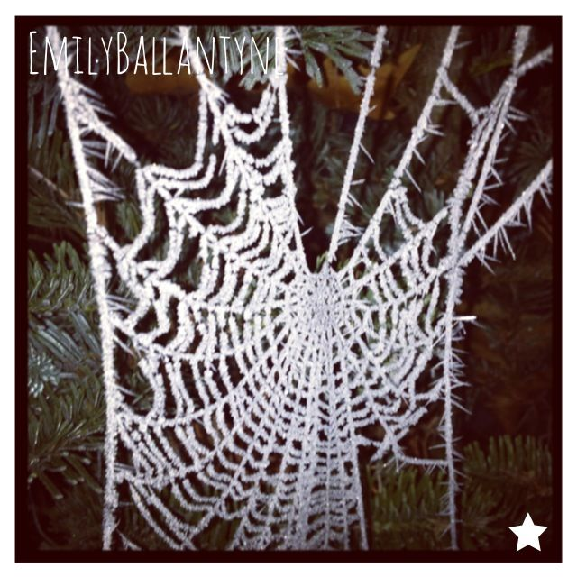 The Web of Winter