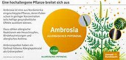 ambrosia pflanze bilder - Bing images