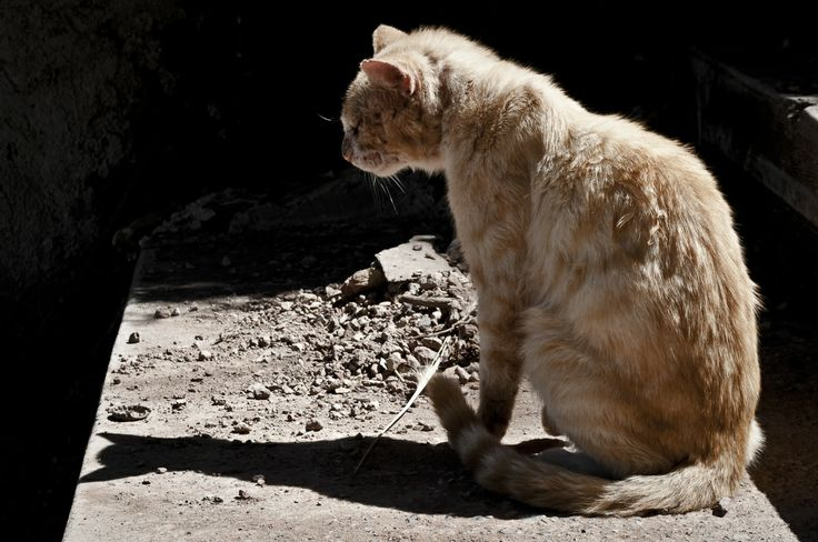 Fotografía de Perros y gatos.