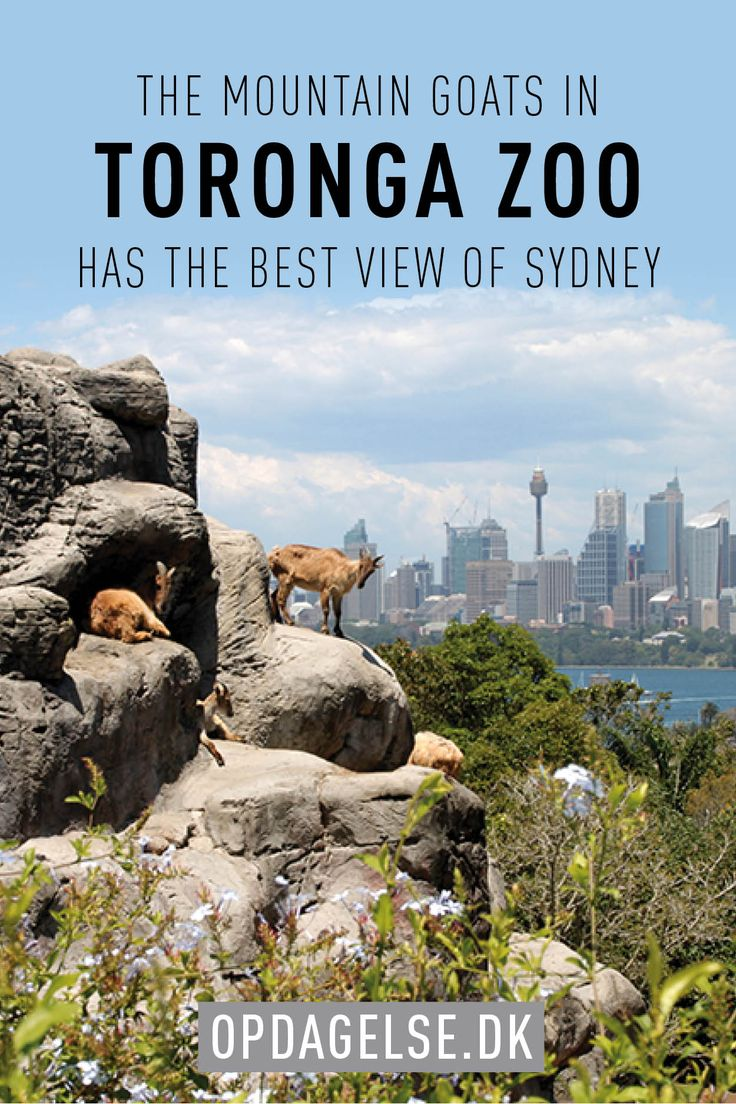A review of our visit at Toronga Zoo in Sydney