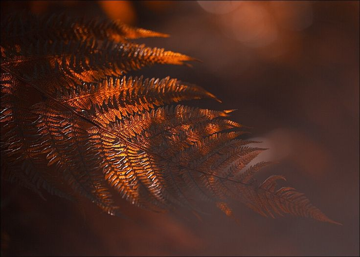 Фотография tender автор Robert Adamec на 500px