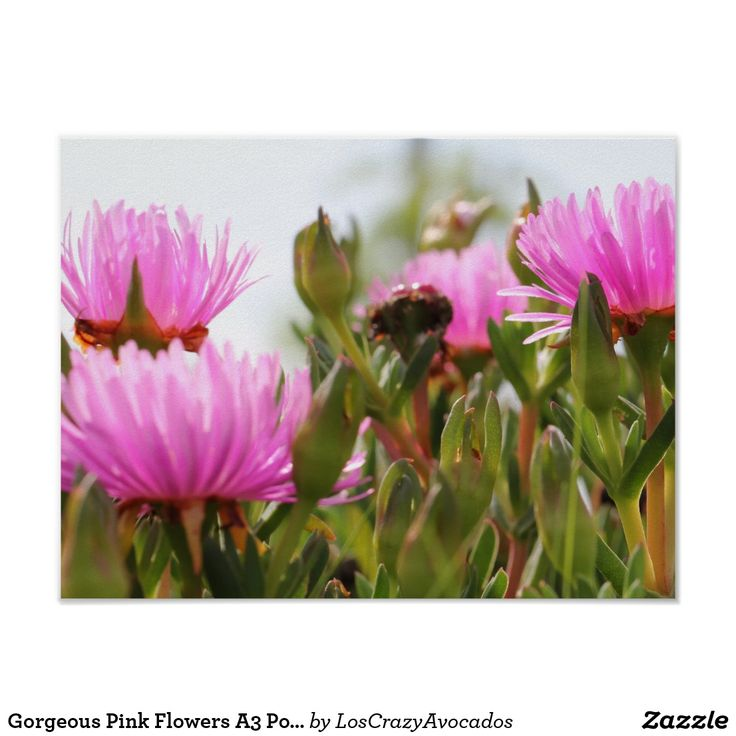 Gorgeous Pink Flowers A3 Poster