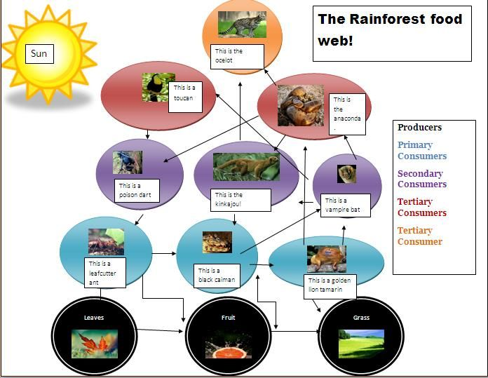 tropical rainforest food web - Google Search | July themes ...                                                                                                                                                                                 More