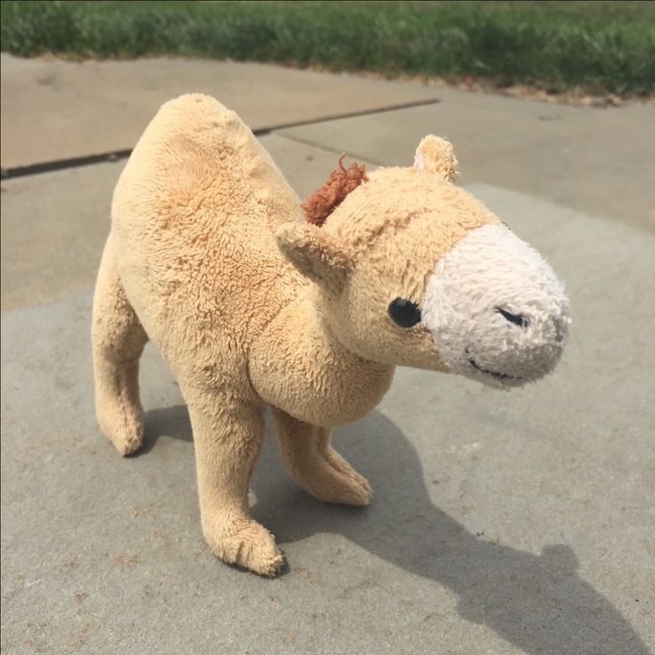 The real-life inspiration behind Remy's beloved Humphrey, the Ironically Named Camel. (Yes, there's a real Humphrey of Dubai!)